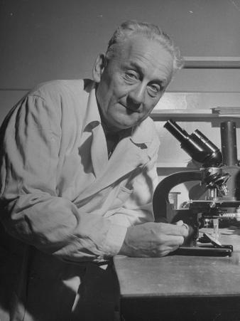 Discoverer of Vitamin C Albert Szent-Gyorgyi, Working with His Microscope