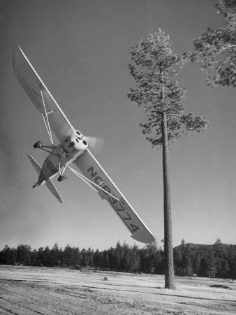 Pilot Sammy Mason Flying around a Tree During a Performance of His California Air Circus