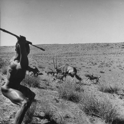 Bushman Throwing His Spear at a Winded Gemsbok, While His Dogs Circle It