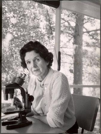 Biologist Author Rachel Carson Working with Microscope at Her Home