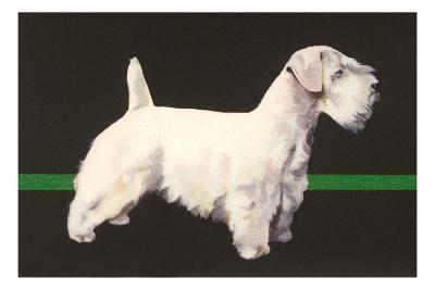 Skye Terrier and German Shepherd