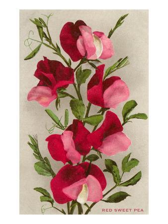 Red Sweet Peas