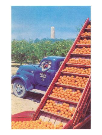 Sorting Oranges in Orchard