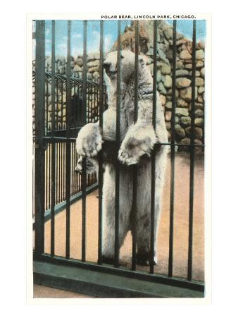 Polar Bear, Lincoln Park Zoo, Chicago, Illinois