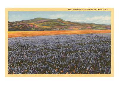 Wildflowers in Spring, California