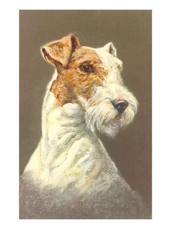 Wire-Haired Terrier