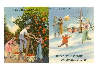 Oranges Versus Snowballs, Florida