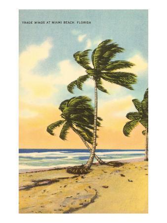Palm Trees, Miami Beach, Florida
