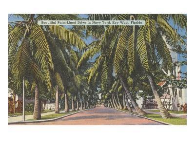 Palm Trees, Key West, Florida