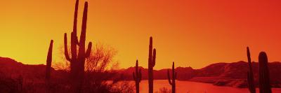 Silhouette of Saguaro Cacti at Sunrise, Tonto National Forest, Arizona, USA