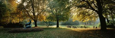 Trees in a Formal Garden, Le Jardin Du Luxembourg, Paris, France