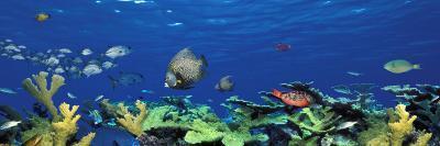 School of Fish Swimming in the Sea, Digital Composite