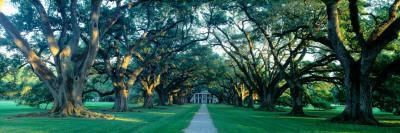 Louisiana, New Orleans, Oak Alley Plantation, Home Through Alley of Oak Trees, Sunset