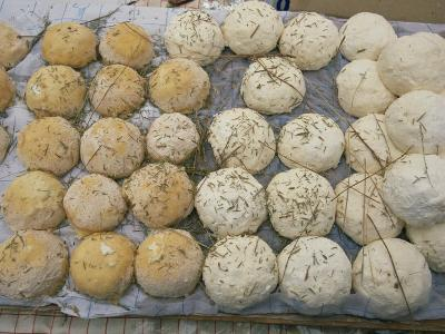 Tray of Round Goats Cheeses in Provence, France, Europe