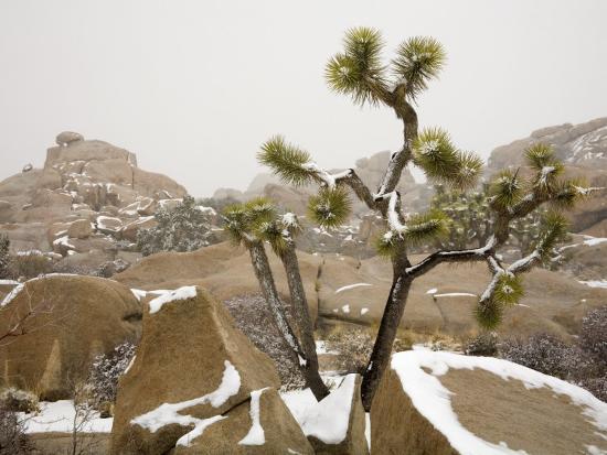 Rare Winter Snowfall Hidden Valley Joshua Tree National Park California Usa