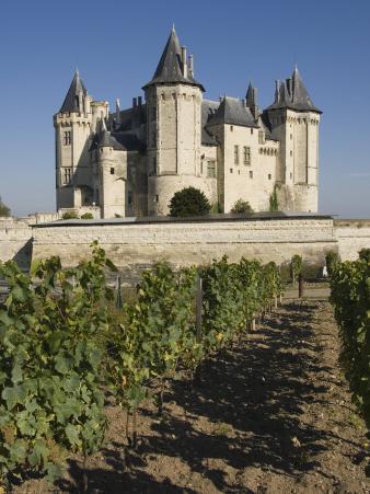 Vineyards around the Chateau De Saumur, Maine-et-Loire, Pays De La Loire, France, Europe