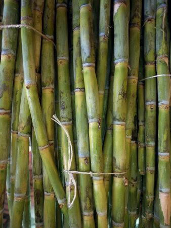 Close-Up of Bundles of Sugar Cane in Mexico, North America