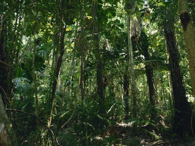 Daintree Rainforest in Cape Tribulation National Park, Queensland, Australia, Pacific
