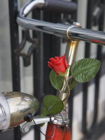 Close Up of a Bicycle with a Rose for Decoration, Amsterdam, Netherlands, Europe