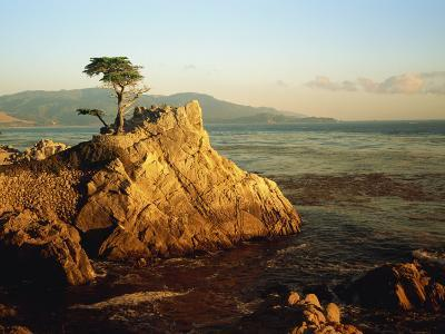Lone Cypress Tree on Rocky Outcrop at Dusk, Carmel, California, USA