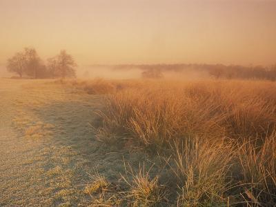 Winter Landscape Looking Towards Pen Ponds at Sunrise in Richmond Park, Surrey, England, UK