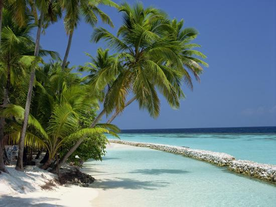 Palm Trees On A Tropical Beach In The Maldive Islands