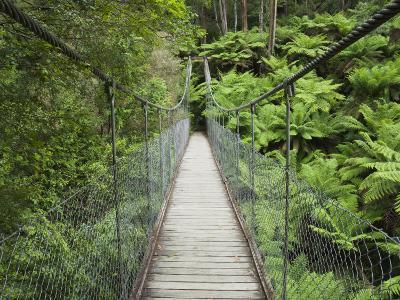 Suspension Bridge and Rainforest, Tarra Bulga National Park, Victoria, Australia, Pacific