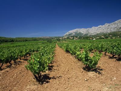 Vineyard at Foot of Mont Ste.-Victoire, Near Aix-En-Provence, Bouches-Du-Rhone, Provence, France