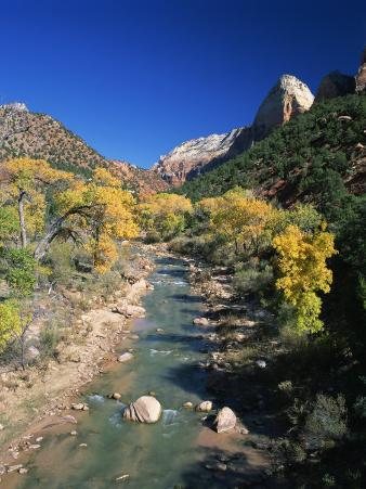 Cottonwood Trees Along the Banks of the Virgin River, Zion National Park, Utah, USA