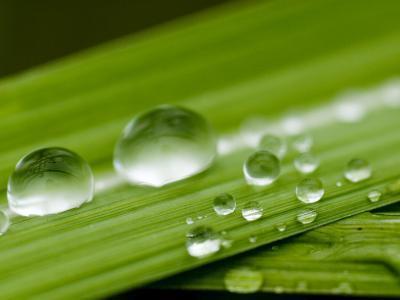 Water Droplets on Grass, Dali, Yunnan, China