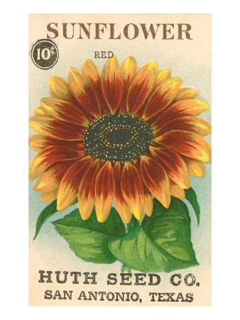 Sunflower Seed Packet