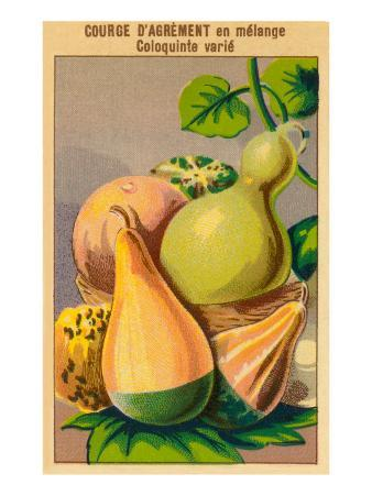 French Gourd Selection Seed Packet