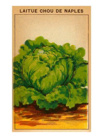 French Cabbage Seed Packet