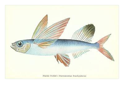 Hawaiian Fish, Malolo Puhiki'i