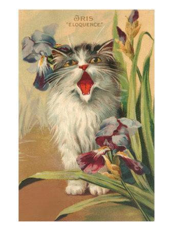 Iris Eloquence with Kitten