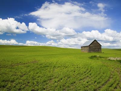 Spring Lentil Crop and Old Barn, Idaho, USA