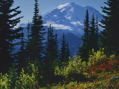 Mt. Rainier above autumn Huckleberry, Mt. Rainier National Park, Washington, USA