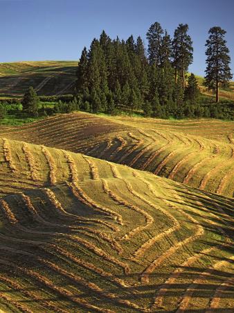 Fields, Palouse, Whitman County, Washington, USA