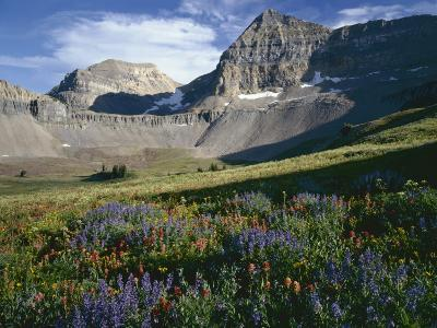 Wildflower meadows below Mount Timpangos, Uinta-Wasatch-Cache National Forest, Utah, USA