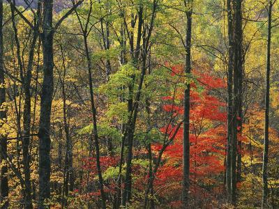 Autumn forest near Peaks of Otter, Blue Ridge Parkway, Appalachian Mountains, Virginia, USA