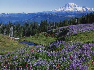Meadows with Mt. Rainier in distance, Washington Mt. Adams Wilderness, USA