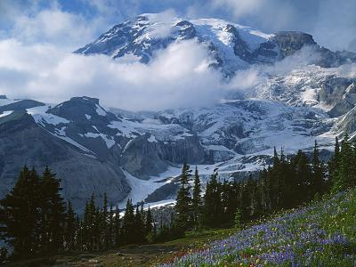 Mt. Rainier from Paradise Meadows, Mt. Rainier National Park, Washington, USA