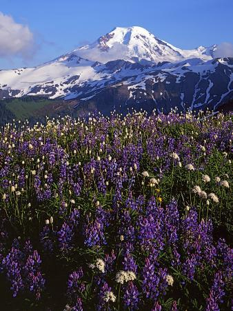 Meadows, Mt. Baker Snoqualmie National Forest, Washington, USA