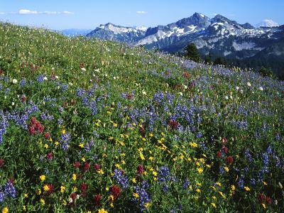 Alpine meadow below Tatoosh Mountains, Mt. Rainier National Park, Washington, USA