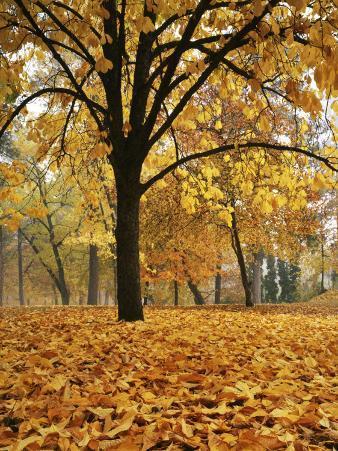 Autumn, Manito Park, Spokane, Washington, USA