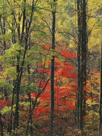 Autumn forest near Peaks of Otter, Blue Ridge Parkway, Appalachian Mountains, Virginia, USA