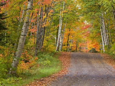 Colorful Autumn Trees, Keweenaw Penninsula, Michigan, USA