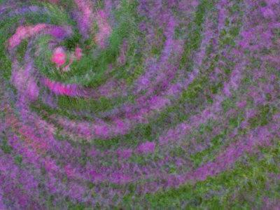 Multiple Exposure Swirl of Purple Petunias, Arlington, Virginia, USA