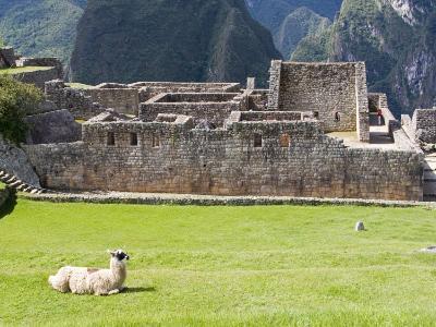 Llama Resting on Main Plaza, Machu Picchu, Peru