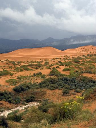 Storm at Coral Pink Sand Dunes State Park, Utah, USA